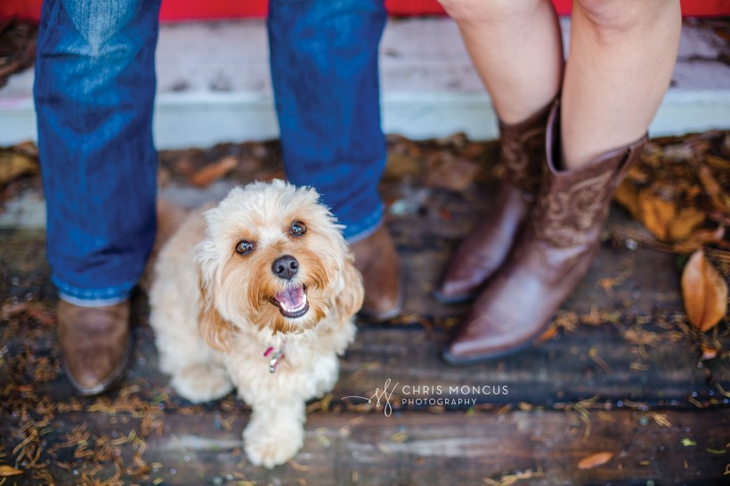 Cavapoo Puppy Engagement Portraits