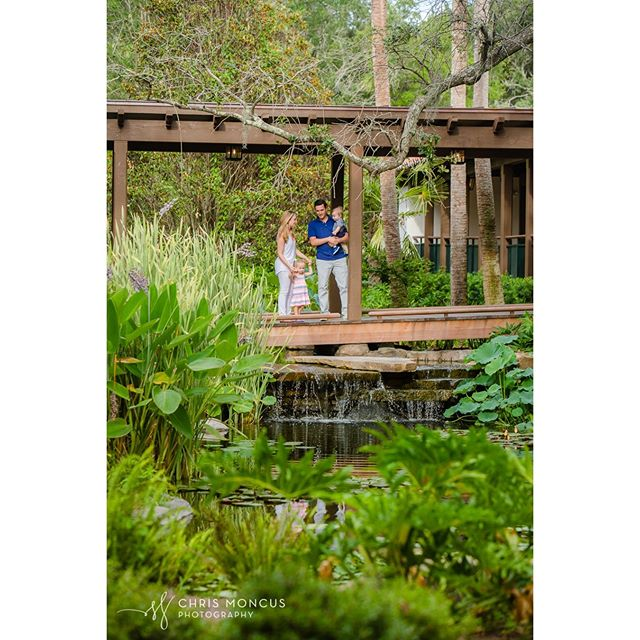 Sea Island @sea_island is full of amzing spots to photograph our clients. During a their stay we spent some time around the Cloister and this tranquil spot. #SeaIsland #SeaIslandPhotographer #SeaIslandPhotography #FamilyPhotography #Family #GoldenIsles