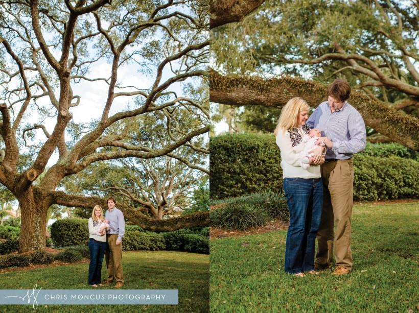 Sea Island Oak Trees